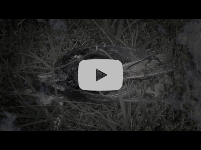 """PERCHTA Releases Official Music Video for """"Erdn"""""""